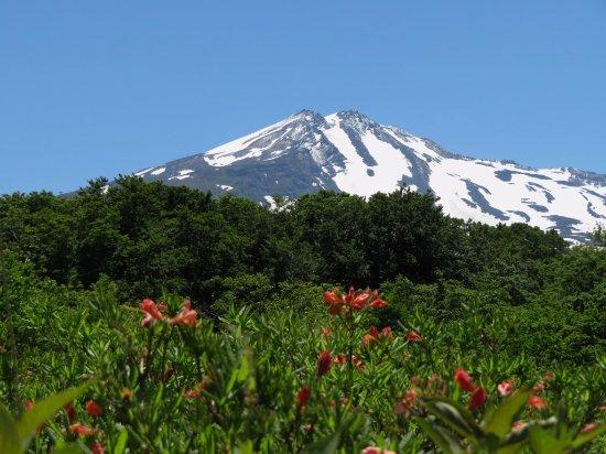 Yurihonjo, Japan: レンゲつつじと残雪の鳥海山