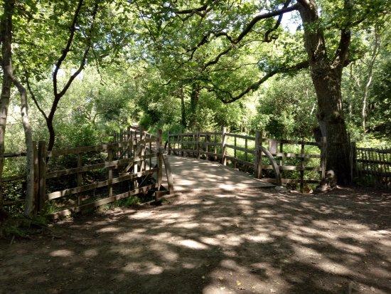 Hartfield, UK: Poohstick bridge