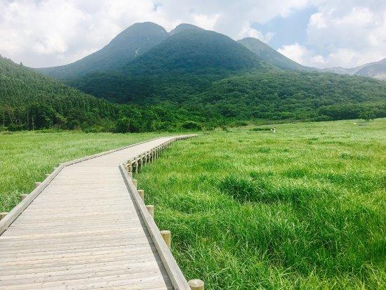 Tadewara Wetlands