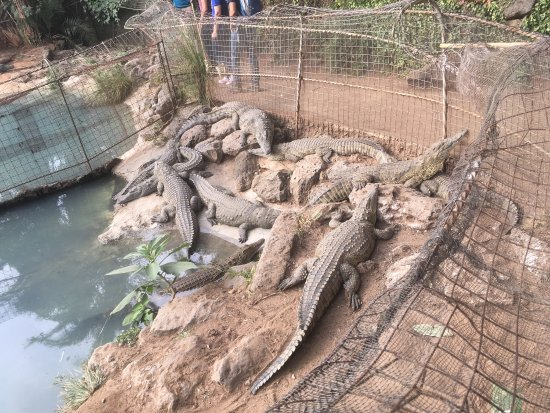 Nairobi Mamba Village: You could treat the crocodiles and turtles better