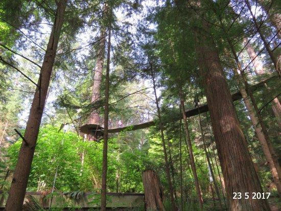 North Vancouver, Canada: Looking up to the treetop walk