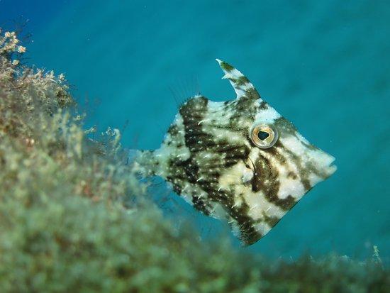 Aquasport Diving