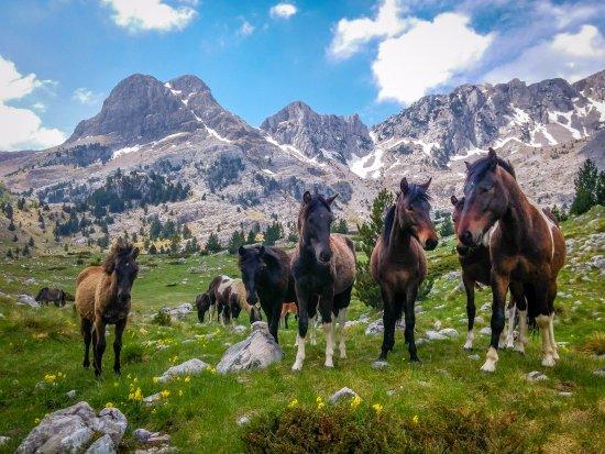 natural horse llc florence montana - photo#17