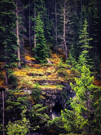 Maligne Adventures: Maligne Canyon foliage