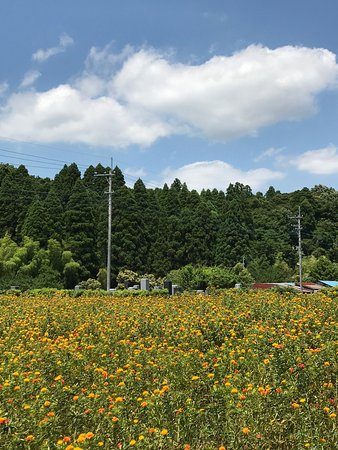 Chonan-machi, ญี่ปุ่น: photo1.jpg