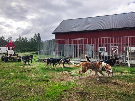 Nord-Trøndelag, Norge: Hundekjøring og besøk i hundegården
