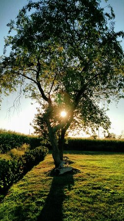 Escobar's Farmhouse Inn: Sunset between the two wild cherry trees