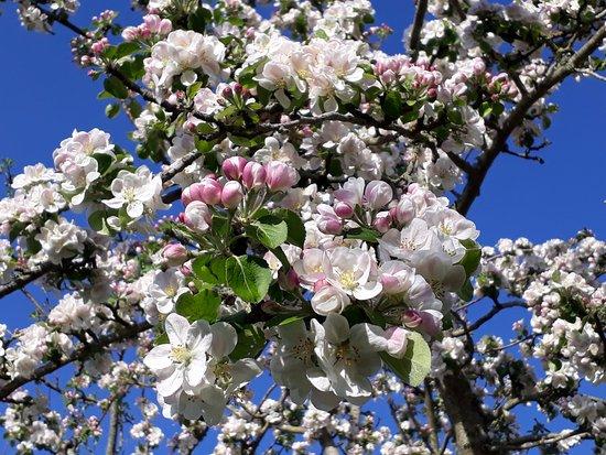 Washford, UK: Blossom
