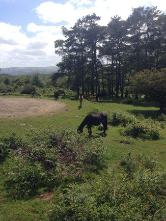 Widecombe in the Moor, UK: photo1.jpg