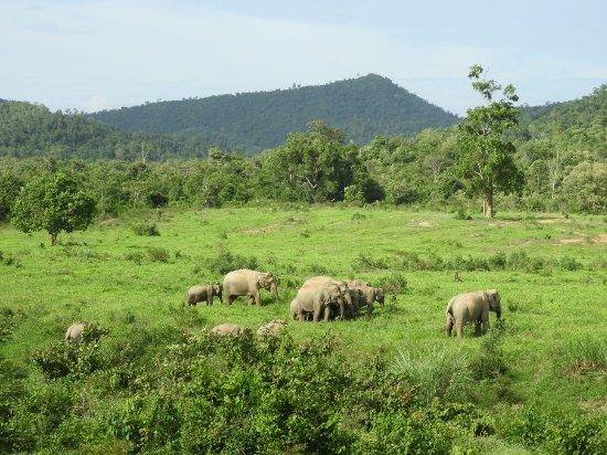 Provincie Prachuap Khiri Khan, Thailand: Elephants