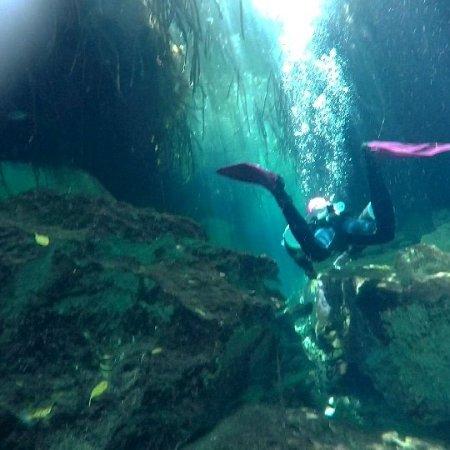 La Calypso Dive Center: IMG_20170608_074117_475_large.jpg