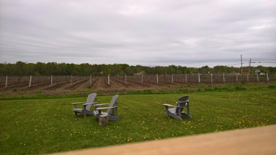Wellington, Canada: View of the Winery in the Back