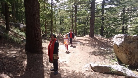 Gangotri, India: A pic while on the trek