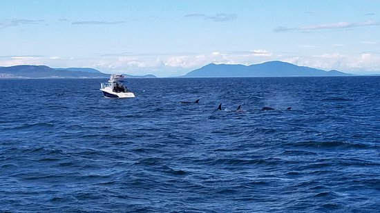 Edmonds, WA: So many Orcas!