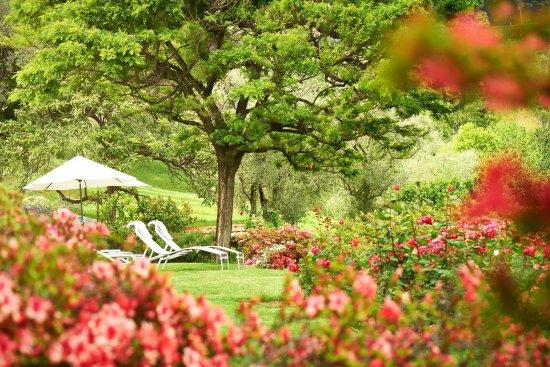 Hotel Belvedere Bellagio: Garden with azaleas in bloom