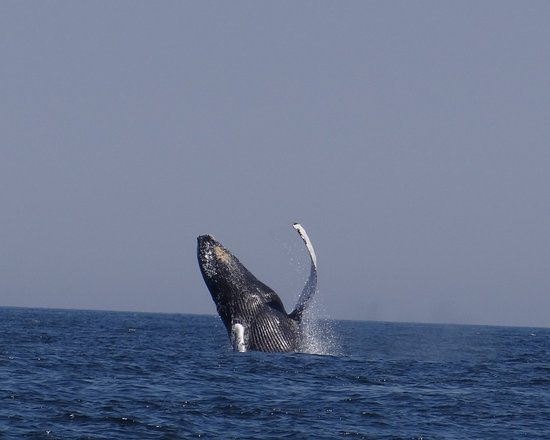 Harwich, MA: Private Whale Watch