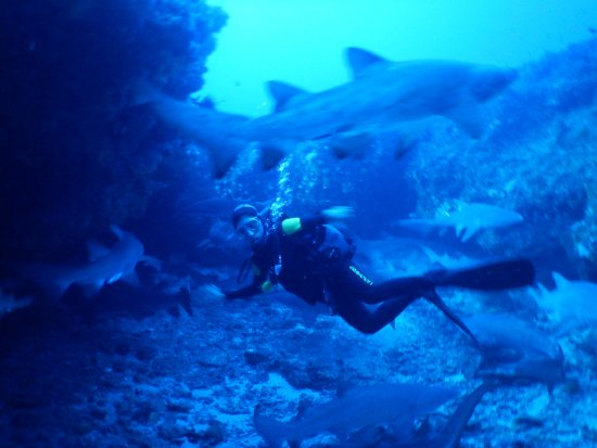 Shelly Beach, Zuid-Afrika: Diving the Raggie cave with 20-30 Ragged tooth sharks every visit.