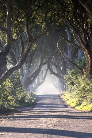Glenariff, UK: Dark Hedges Game of Thrones locations.