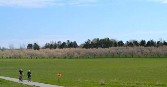 Suttons Bay, MI: Cherry blossoms on the Leelanau Trail