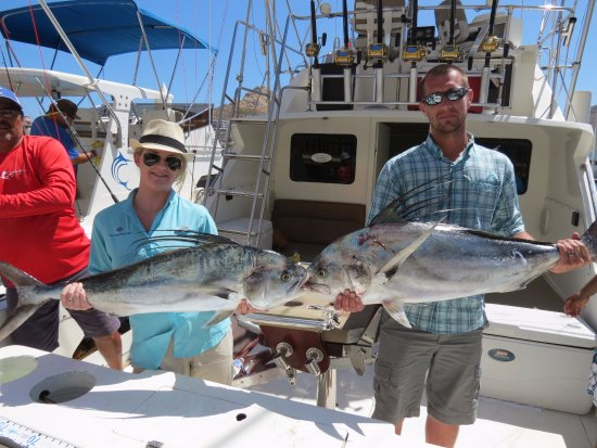 2 of 3 rooster fish picture of pisces sportfishing cabo for Rooster fish cabo