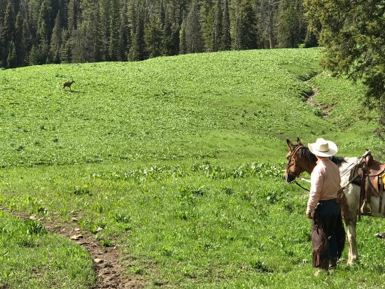 Alpine, Wyoming: photo1.jpg