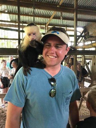 Coxen Hole, Honduras: Monkey
