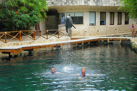 Delphinus Riviera Maya: Couples dream experience, with baby dolphin carrying out large jump.