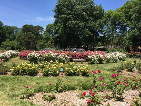 Whetstone Park / Park of Roses