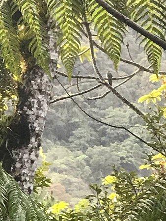 Baja Verapaz Department, Guatemala: El quetzal