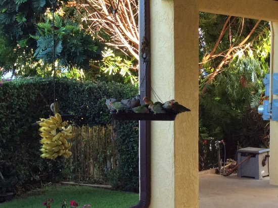 Hale Huanani Bed and Breakfast: Lovely birds in the morning