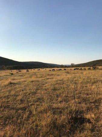 Welgevonden Game Reserve, Güney Afrika: photo4.jpg