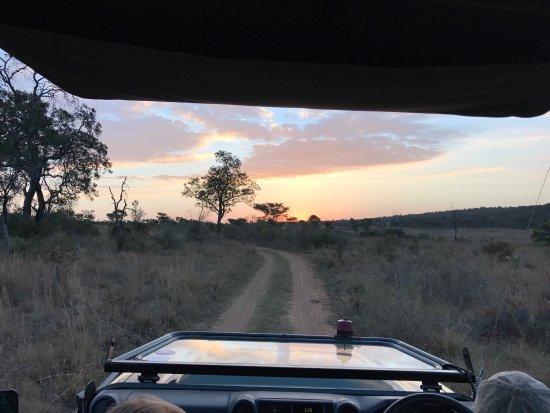 Welgevonden Game Reserve, Sydafrika: photo8.jpg