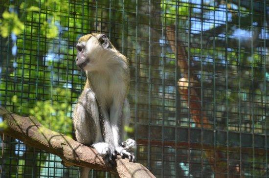 Hodonin, Çek Cumhuriyeti: Lemur