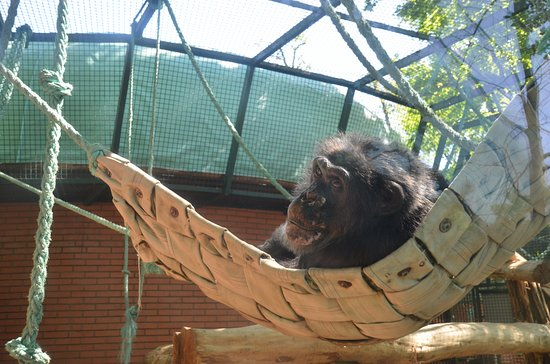 Hodonin, Çek Cumhuriyeti: šimpanz