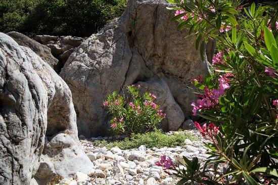 Аналипси, Греция: Veel bloemen in juni