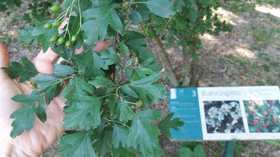 Relais Agriturismo Ormesani : verde molto curato
