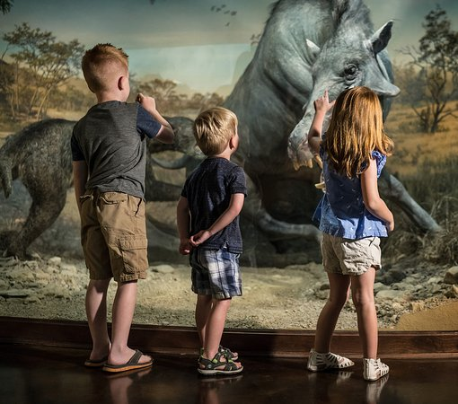 Ridgedale, MO: See ancient animals that roamed the Ozarks thousands of years ago.