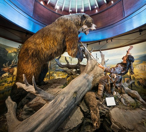 Ancient Ozarks Natural History Museum Address