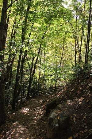 Maggie Valley, NC: Path leading to the viewing platform.