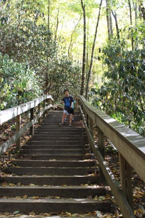 Mingo Falls: Stairs, not too steep.