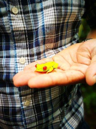 Bijagua de Upala, Costa Rica: la de ojos rojos en nuestras manos
