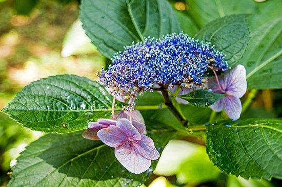 Manteo, NC: Beautifuil flowers