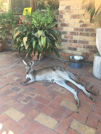 Agnes Water, Αυστραλία: photo3.jpg