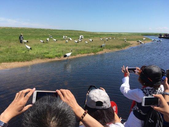 Qiqihar, China: Zhalong Nature Reserve