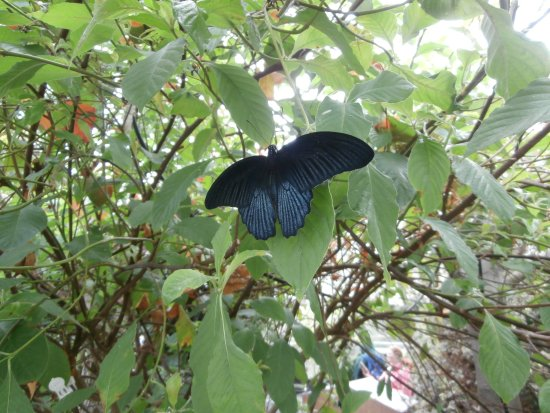 Malahide, Irland: The Butterfly House