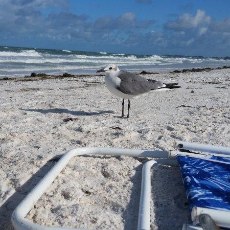 Bradenton Beach, FL: IMG_20170608_085251_104_large.jpg