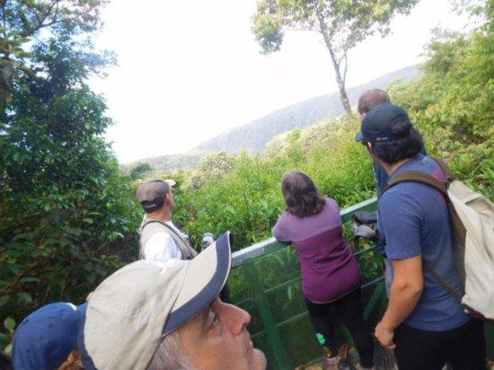 Children's Eternal Rain Forest : Mirador en Bosque Eterno de los Niños en un dia claro!