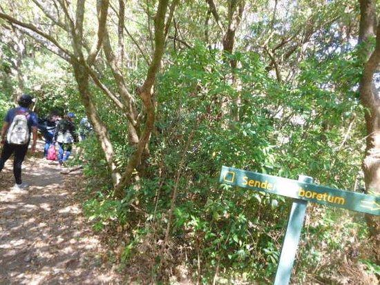 Children's Eternal Rain Forest : Perfecto dia para caminar por los senderos.