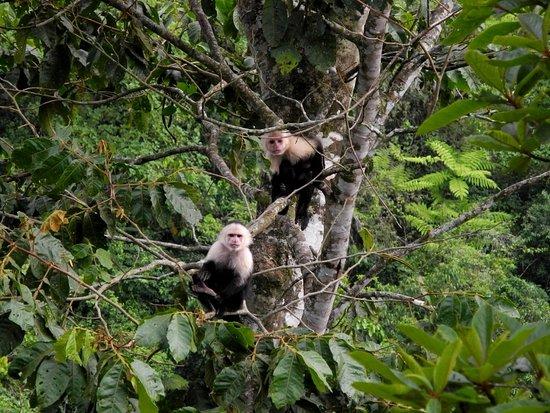 San Vito, Costa Rica: Hello Monkeys at Casa Botania!