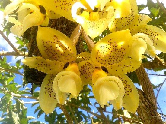 San Vito, Costa Rica: Orchid collection at Casa Botania